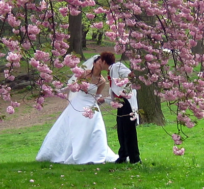 Wedding-cherry blossoms