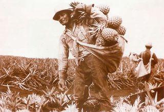 PineappleWorker_jpg